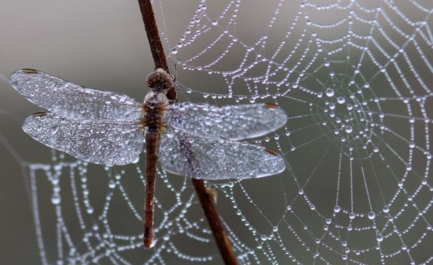 Nella tela del ragno: la mia esperienza col narcisismo